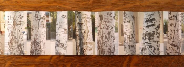 White Poplars - John Dilnot (2)
